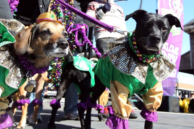 Dogs in costumes are paraded on stage for the best of dog contest during the Pet Parade in St. Louis on February 23, 2014. UPI/Bill Greenblatt