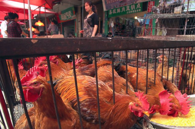 The higher than expected demand for soybeans in China may be partly explained by an increase in the nation's poultry production, as chickens are fed soybean meal. File Photo by Stephen Shaver/UPI