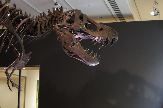 The juvenile Tyrannosaurus rex had a weaker bite than adult counterparts, according to a study by researchers in Britain. File Photo by John Angelillo/UPI