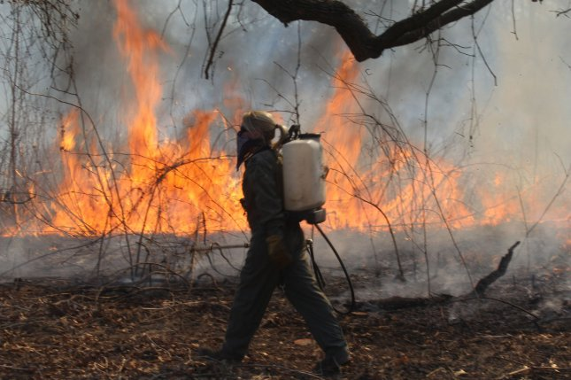 New research suggests insect outbreaks can reduce the severity of forest fires. File photo by UPI/Bill Greenblatt
