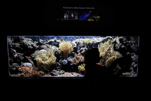 New research suggests algal toxins can lurk in aquariums. Photo by UPI/Roger L. Wollenberg