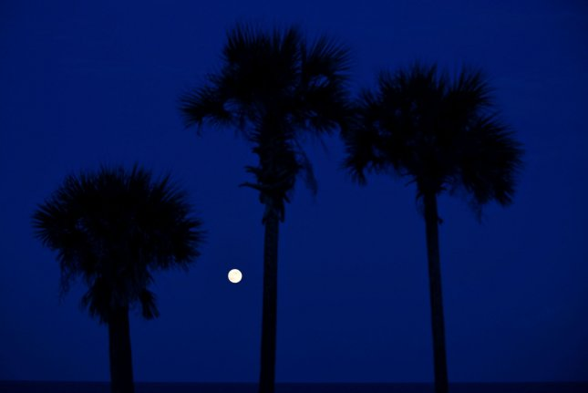 The second full moon of the month, known as a Blue Moon rises near a group of palm trees in Flagler Beach, Florida on August 31, 2012. File photo by Kevin Dietsch/UPI