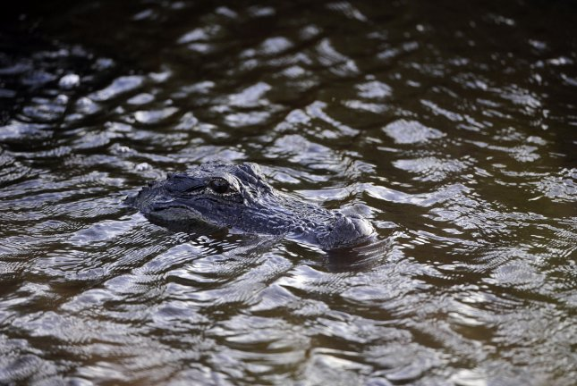 Wildlife officials in Kentucky said an alligator found in Kentucky Lake was likely a former pet released into the wild. File Photo by David Tulis/UPI