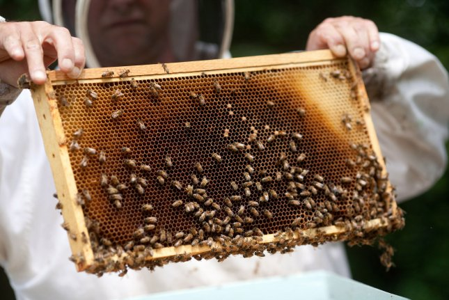 Charlie Brandts, a White House carpenter as well as beekeeper, collects the first batch of honey from the beehives on the South Lawn of the White House, June 10, 2009. (UPI Photo/Lawrence Jackson/White House)