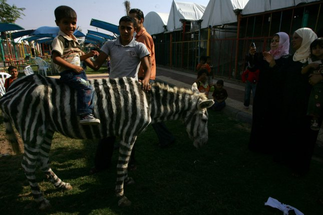 Palestinians visits donkeys, painted in a zebra-like pattern, at the Marah Land Zoo outside Gaza City on October 10, 2009. Two white donkeys dyed with black stripes delighted Palestinian kids at a small Gaza zoo, who had never seen a zebra in the flesh. A genuine zebra would have been too expensive to bring into Israel-blockaded Gaza, said zoo owner Mohammed Bargouthi. UPI/Ismael Mohamad