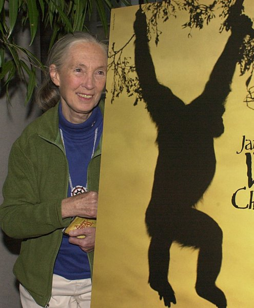 Jane Goodall poses on Sept. 27, 2002, with the poster for a documentary film titled Wild Chimpanzees featuring Dr. Goodall and her work amongst the chimpanzees at the Gombe National Park in Tanzania. (UPI/Ezio Petersen)