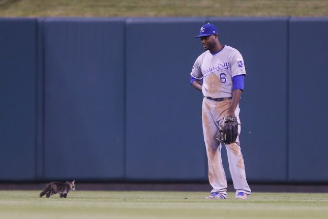 Kansas City Royals center fielder Lorenzo Cain watches as a cat runs through the outfield during the sixth inning against the St. Louis Cardinals at Busch Stadium in St. Louis on August 9, 2017. Play was stopped until a grounds keeper removes the feline. Photo by Bill Greenblatt/UPI