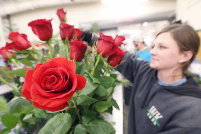 Worker Dani Knoll assembles a dozen roses for a Valentine's Day sale at the Walter Knoll Florist in St. Louis, Mo., on Thursday. Photo by Bill Greenblatt/UPI