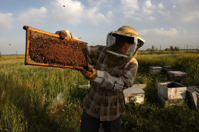 Varroa mite infections have been at least partially blamed for colony collapse disorder. New research shows some bees are better than others at grooming and battling mite infections. Photo by UPI/Ismael Mohamad