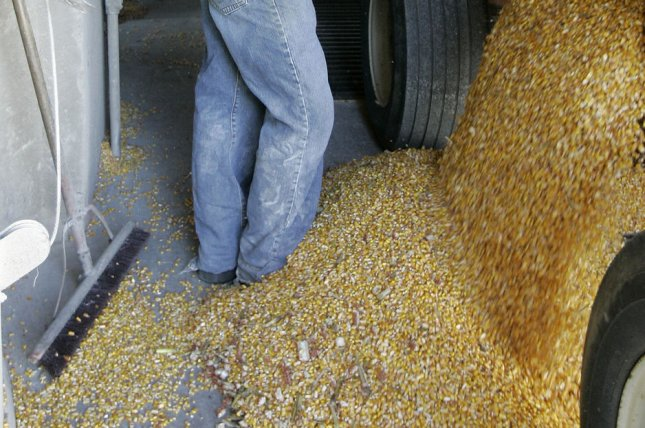 A new film highlights the dangers farmers face storing grain in farm bins as the amount of stored grain across the country skyrockets. File photo by Brian Kersey/UPI