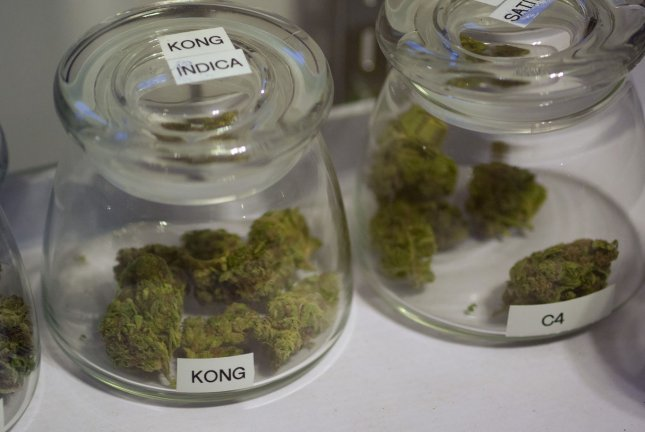 Jamaica's new drug laws will legalize possession of up to two ounces of marijuana, and also legalize marijuana for medical, religious, and scientific needs. (UPI/Gary C. Caskey)