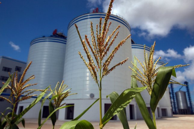 Corn grows next to grain silos at a farm in Fujin, Heilongjiang Province, China.Beijing may also be ready to send another 200,000 tons of food aid, Tuesday's report said. File Photo by Stephen Shaver/UPI