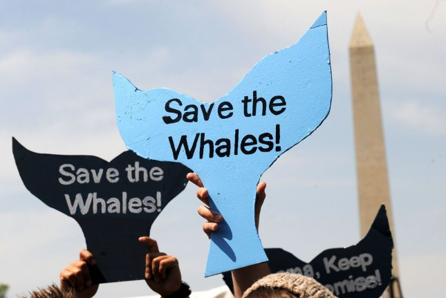 Japan to allow commercial whaling for first time since 1986 - UPI com