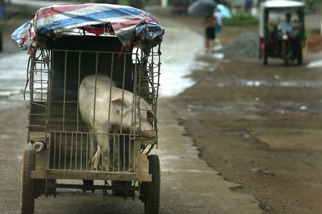 Some estimates say China will lose half of its pig population to African swine fever. File Photo by Stephen Shaver/UPI