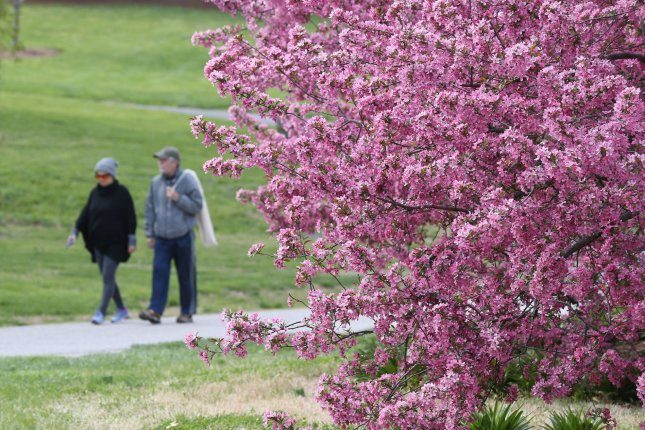 Pink Flower Blossom trees are in full bloom as visitors exercise in Forest Park in St. Louis on April 16. Photo by Bill Greenblatt/UPI