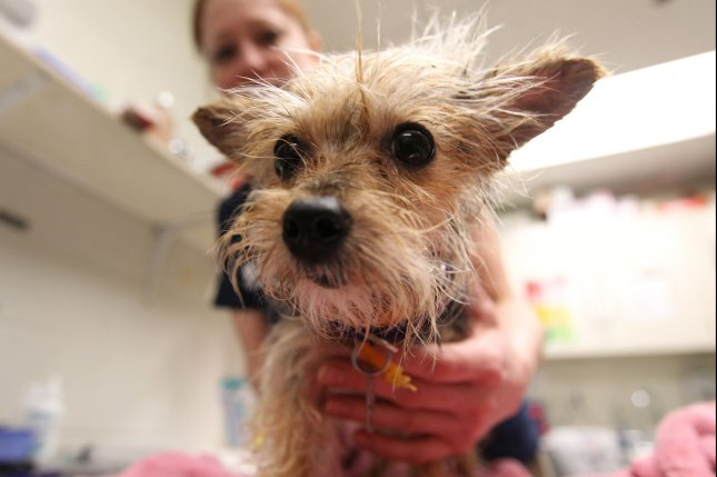 Fda Warns Pet Owners About Possible Side Effects Of Flea