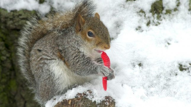 Yale in uproar over disappearance of campus squirrels