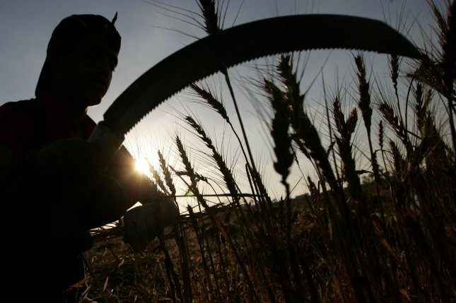 Palestinian farmers collect wheat stalks during the annual harvest at a farm near the Deir Al-Balah refugee camp, in central Gaza. A new report Friday said the number of people worldwide who don't have consistent access to food is growing. File Photo by Ismael Mohamad/UPI
