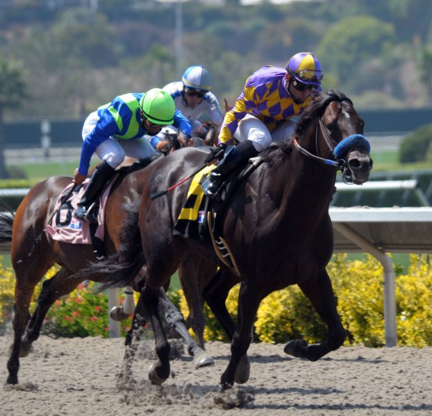 Draft Choice with jockey Joel Rosario lead the pack on the final stretch during the 3rd race on opening day of the 70th racing season July 22, 2009 at the Del Mar Thoroughbred Club in Del Mar, California. (UPI Photo/Earl S. Cryer)