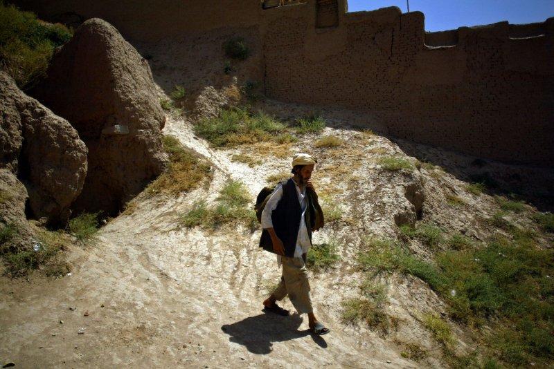 Afghan poppy crop hit by fungus