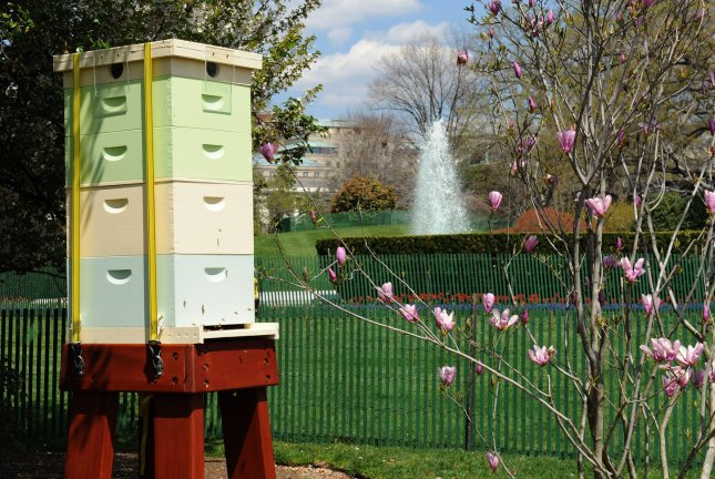 White House commits to saving honey bees