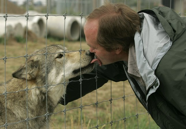 Hondo (L), a wolf at the Rocky Mountain Wildlife Conservation Center give Pat Craig (R) a good morning greeting at the center in Keenesburg, Colorado August 20, 2006. (UPI Photo/Gary C. Caskey)
