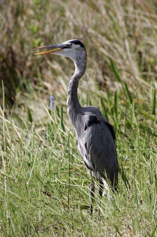 Everglades still in decline, group says
