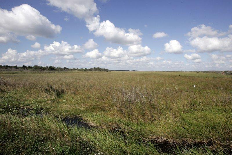 A river of grass describes the Royal Palm area of the Everglades National Park. (UPI Photo/Michael Bush)
