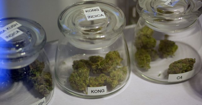 Sample buds of marijuana flowers are displayed in glass containers at the 3D Cannabis Center in Denver on January 1, 2014. UPI/Gary C. Caskey
