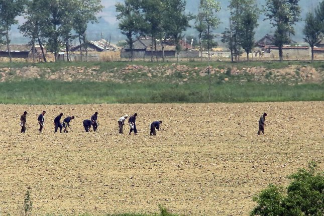 North Koreans are shown working in the fields, but the country denied child malnutrition allegations Tuesday, despite past reports about the prevalence of undernourishment that impacts  children there. File Photo by Stephen Shaver/UPI