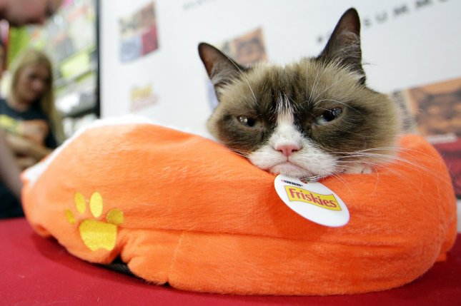 Grumpy Cat has won a copyright lawsuit against coffee company Grenade for $710,001. File Photo by John Angelillo/UPI