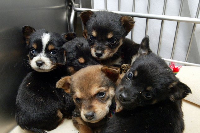Humane Society Of Missouri Rescues 253 Animals From Property Near St Clair Upi Com