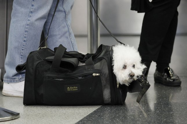 A dog waits in line with its owners at the ticketing counter at O'Hare International Airport on November 24, 2010. American Airlines said emotional support animals may travel with owners as a carry-on pet or in cargo -- but not as a service animal. File Photo by Brian Kersey/UPI