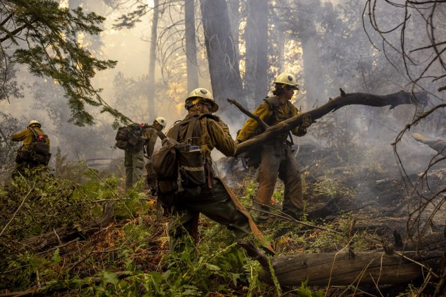 Members of a hot shot crew remove fuel along a containment line during the Caldor Fire near Meyers, Calif., on August 31. Photo by Peter DaSilva/UPI