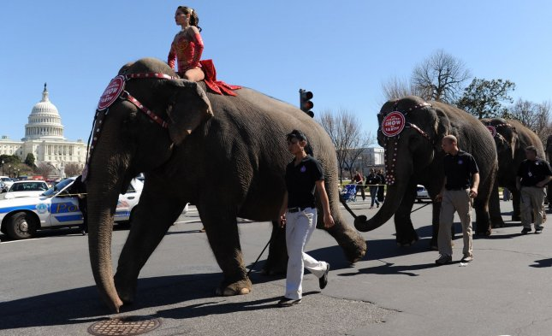 Georgia ban on circus elephant 'hooks'