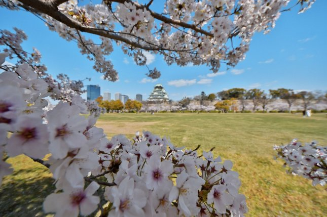 Scientists in South Korea say cherry blossoms can offset greenhouse gas emissions, like these blooming April 5 atOsaka Castle Nishinomaru Garden in Japan. Photo by Keizo Mori/UPI