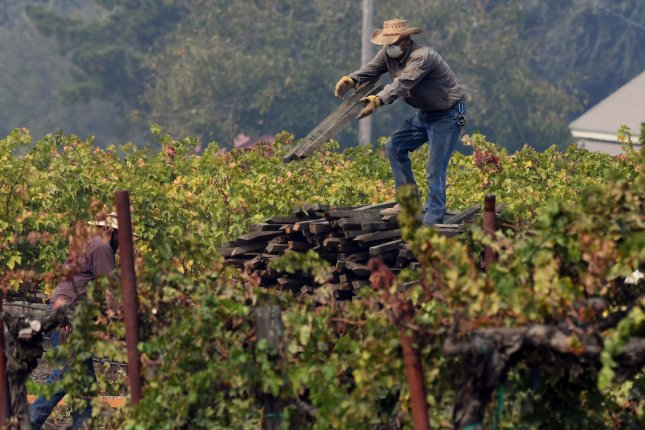 Global wine production falls to 50-year low