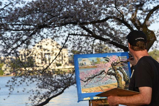 Professional painter Charles Cushing, of Philadelphia, Pa., paints cherry blossom trees near the Jefferson Memorial at the Tidal Basin in Washington D.C. on April 13, 2014. UPI/Molly Riley