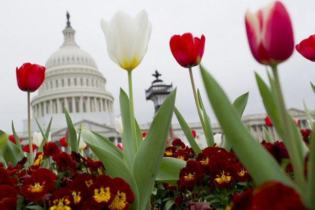 Tulips bloom on Capitol Hill in Washington, D.C.. UPI/Kevin Dietsch