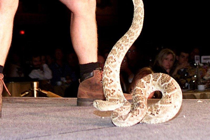 Girl taken to hospital after rattlesnake bite at university of michigan botanical gardens for University of michigan botanical gardens