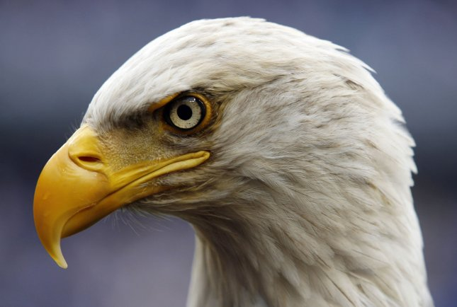 Challenger, the American Bald Eagle, lands on the field before the New York Yankees play the Chicago Cubs at Yankee Stadium in New York City on April 4, 2009. (UPI Photo/John Angelillo)
