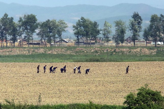 North Koreans work in the fields near the North Korean city Sinuiju, across the Yalu River from Dandong, China's largest border city with North Korea. Pyongyang has emphasized self-sufficiency in agriculture, but the country has been increasing imports of grain from China. File Photo by Stephen Shaver/UPI