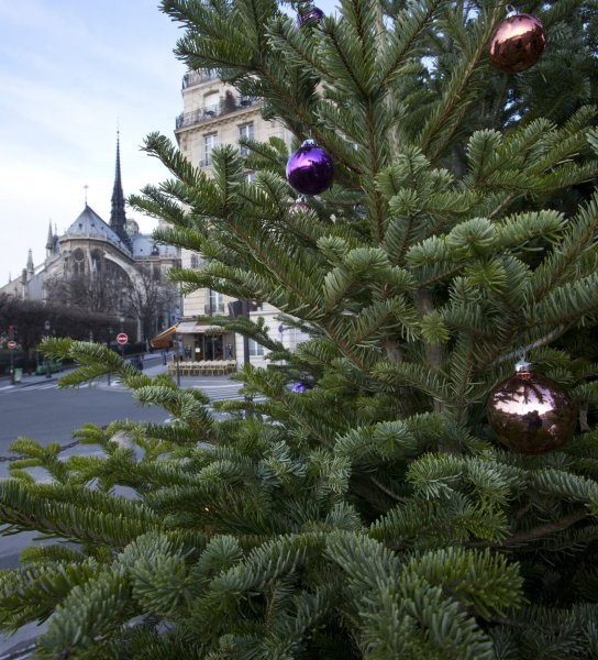 Fresh Christmas trees may be responsible for epidemic peaks of respiratory illness that occur in the weeks around the Christmas holiday, U.S. researchers say. UPI/David Silpa.