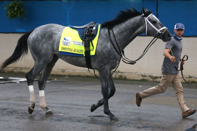 Kentucky Derby favorite Essential Quality prepares to go to the track Thursday during for an early morning workout as he prepares for the 147th running of the Kentucky Derby at Churchill Downs. Photo by John Sommers II/UPI
