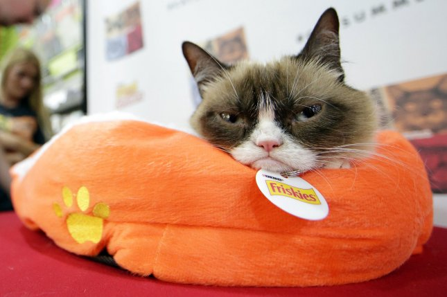 Grumpy Cat sits on a pillow when feline Internet sensations Grumpy Cat and Oskar the Blind Cat make a special appearance at Bleecker Street Records in New York City on July 16, 2014. File Photo by John Angelillo/UPI