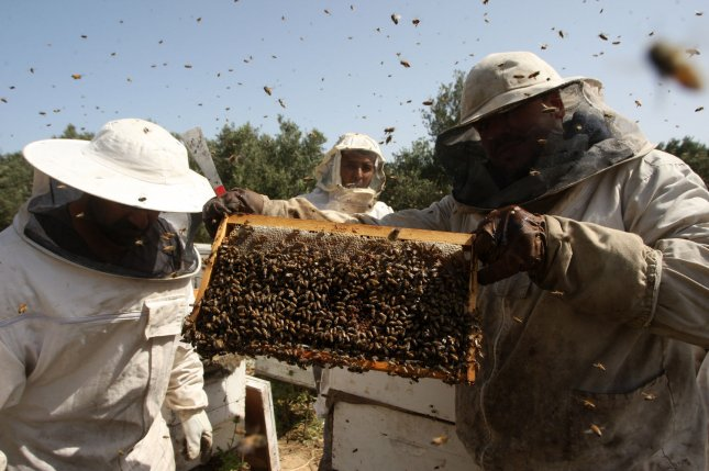 Research suggests bees and other pollinators now face the threat of a new virus carried invasive wasps. Photo by Ismael Mohamad/UPI