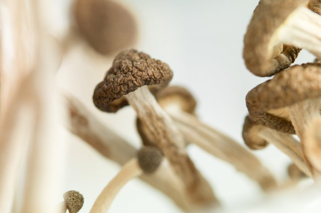 Researchers say that, when combined with psychotherapy, psilocybin may help some cancer patients beat back anxiety and depression. File Photo by Shots Studio/Shutterstock.