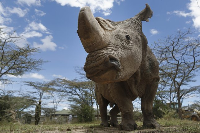 Sudan, the last surviving male northern white rhino on the planet, died in Kenya. File photo by Dai Kurokawa/EPA-EFE
