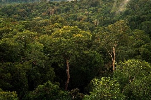 Researchers say that the best of the last tropical forests are exceedingly vulnerable. Pictured, a view of the Amazon basin forest north of Manaus, Brazil. Photo by Phil P. Harris/Wikimedia