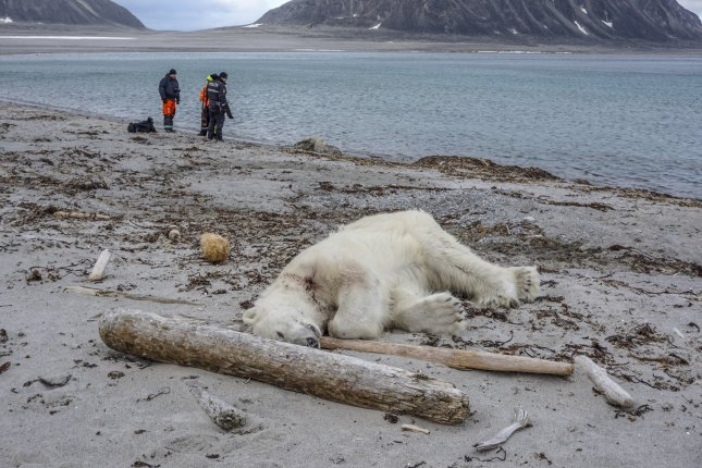 Polar bear attacks cruise ship employee on Arctic island